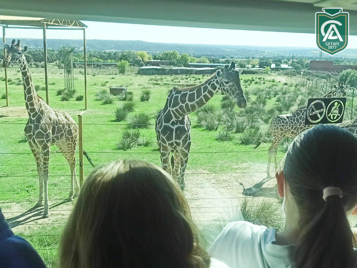safari-park-colegio-los-angeles-02
