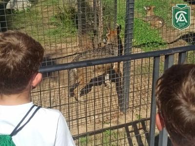 safari-park-colegio-los-angeles-06
